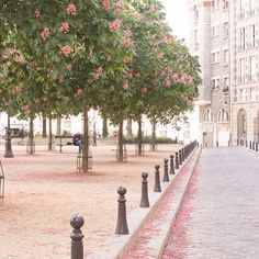 Place Dauphine one of my favorite little corners in Paris. Located on ile de la cute it's one of my favorite places to stroll and people watch. The afternoon light perfectly compliments the hues of pink from the chestnut trees  by rebeccaplotnick