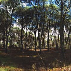 Woods in Fiais da Beira. Great place to enjoy the nature and have some fresh air.