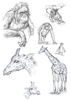 The Fundamental of Drawing Animals on Behance