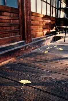 autumn morning on wood corridor by Atsuhiko Takagi taken on 2016/11/22. Minolta α7 AF ZOOM 17-35mm 1:3.5 G @35mm FUJIFILM SUPERIA PREMIUM 400 http://flic.kr/p/QjYb6T