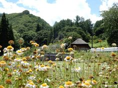Minamiaizu - The Beauty And Serenity Of A Secluded Farming Village Beauty Room, Beauty Art, Web Magazine, Beach Waves, Beauty Quotes, Permaculture, Japan Travel, Farming, Perfect Place