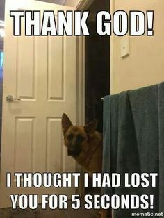 This is every dog ever.
