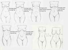 Breasts. Anatomy. Female