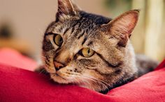 Download wallpapers cat, pets, cute animals, cats
