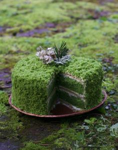 Cake: An Ode To Moss Gazing Bake your own easy, beautiful, and nutritious spring dessert in honor of the ancient beauty and magic of .Bake your own easy, beautiful, and nutritious spring dessert in honor of the ancient beauty and magic of . Moss Cake, Desserts Printemps, Baking Recipes, Cake Recipes, Lemon Buttercream, Spring Desserts, Deco Floral, Wild Edibles, Cake Tasting