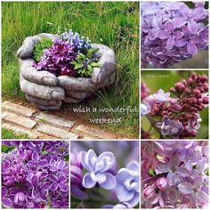 Wonderful weekend 💕✨ Flower Collage, Mix Photo, Succulent Wall, Moody Blues, Happy Weekend, Beautiful Words, Mood Boards, Color Inspiration, Collages