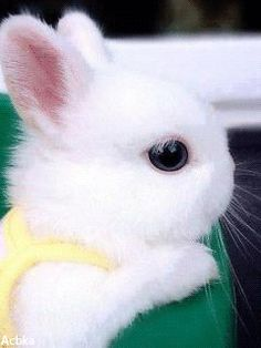 Cute baby animals, cute baby bunnies a animals. Baby Animals Super Cute, Cute Baby Bunnies, Cute Little Animals, Cute Funny Animals, Tiny Bunny, White Bunnies, Baby Animals Pictures, Cute Animal Pictures, Animals And Pets