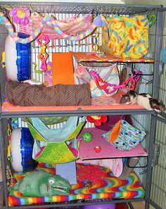 Pet Rat Cages, Rat Care, Cute Rats, Opossum, Pets, Animals, Decorating, Pet Rats, Ideas
