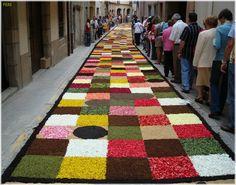 Arbucies catifes - Catalunya