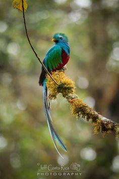 Quetzal #CostaRica