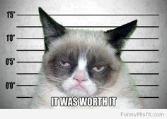 Grumpy Cat's mugshot