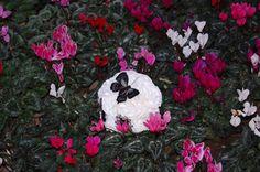 bouquet blanco con mariposa de pluma negra y broches esmaltados del mismo tono.Por siempre jamás a tú lado algodondeluna@gmail.com o 606619349