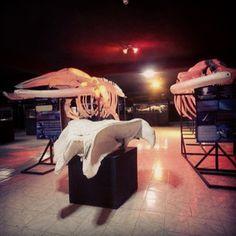 Museo del Mar en Cumaná, Estado Sucre