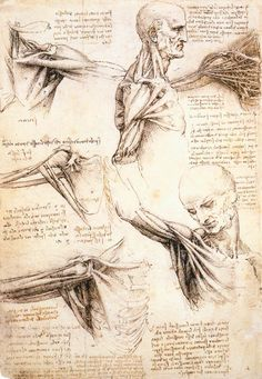 Leonardo Da Vinci's anatomical sketches of the shoulder and arm.