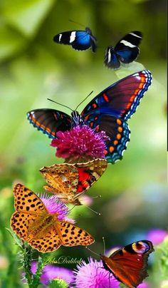 What beautiful butterflies . Most Beautiful Butterfly, Beautiful Bugs, Beautiful Flowers, Papillon Butterfly, Butterfly Flowers, Butterfly Wings, Butterfly Kisses, Beautiful Creatures, Animals Beautiful