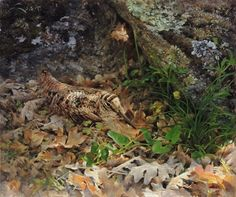 49€ litografía sobre lienzo. Becada entre hojarasca. Oleo sobre lienzo. Manuel Sosa © 2014. Cuadro al óleo de una Becada camuflada entre la hojarasca, al socaire de una roca. #Becada #Chocha #Perdiz #Perdices
