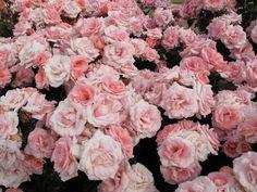 Lots of flowers. <3