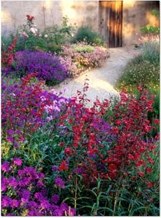 Dry-adapted verbenas, salvias, and penstemons bloom on the slope above a courtyard. Photo: Saxon Holt