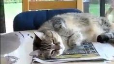 Wake up, Kitty Wake Up, Kitty, Bird, Cats, Funny, Animals, Little Kitty, Gatos, Animales
