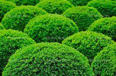 Image result for bushes