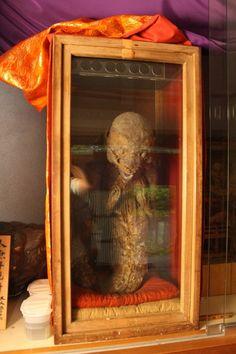 Fujinomiya Mermaid Mummy - Reportedly 1,400 years old, this may be the first of the Fiji Mermaids