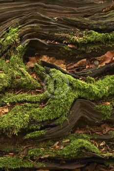 Moss and driftwood