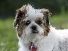 Chiens disponibles pour Adoption | Animatch Dog Adoption