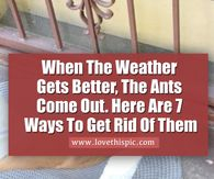 When The Weather Gets Better, The Ants Come Out. Here Are 7 Ways To Get Rid Of Them