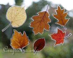 You could do a variation of this by using sticky back plastic, cutting the leaf outline slightly larger than the leaf and sprinkling glitter around the edge. You could then turn it into a mobile to hang in the window!