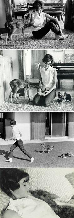 exPress-o: Audrey Hepburn And Her Baby Deer