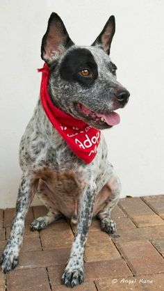 Hi. my name's Lenny and i'm a 2 and a half year old, male, abut 38lbs Terrier mix.  I love to play with other dogs, kids and  cats.. Totally potty trained. I am very friendly and loves to cuddle. Very calm ad sweet. I just lost my home and my family...