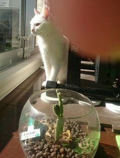 puchikko cat  サボテンとともに陽を浴びてみる。