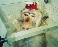 TAKE ACTION!!! Stop Vivisection at University of California - SIGN AND SHARE!!!!! Tell the Univeristy of California vivisection is not the answer to our health needs; rather, it is often dangerous for human health, horrifically cruel, and a waste of taxpayers' dollars. Stop this unproductive use of animals in testing and research at UC San Francisco.