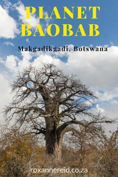 Planet Baobab camp, Makgadikgadi salt pans, Botswana #Makgadikgadi #Botswana #PlanetBaobab