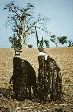 A pair of Chi Wara dancers on the foro ba (big field) bent over their sunsun canes Africa, Mali, Bamana Culture (Photo by Dr. African Masks, African Art, Art Tribal, Tribal Costume, Art Populaire, Art Premier, Tribal People, Art Africain, African Tribes