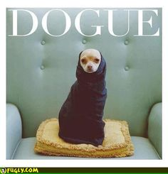 Come On Dogue
