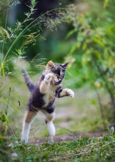3 Tips to Stop Kitty from Ambushing Your Ankles Cat Behavior, Kittens, Cats, Puppies, Cheryl, Animals, Cute Kittens, Gatos, Animales