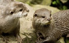 wallpaper images otter  (Hartwell Birds 2560x1600)