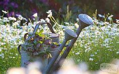 Wasser marsch! *Gieß-ABC* * Living & Green Allotment, Tricks, Plants, Amp, Spring, Vegetable Garden, Water, Studying, Plant