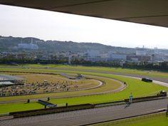 """Tokyo Keibajo"" (Corsa di Cavalli), Tokyo Japan (Novembre)"