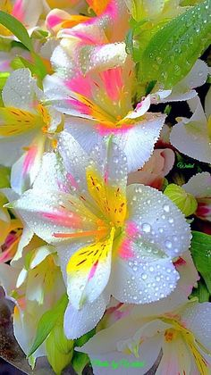 exotic flowers by post uk Beautiful Flowers Wallpapers, Unusual Flowers, Beautiful Flowers Garden, Rare Flowers, Flowers Nature, Tropical Flowers, Amazing Flowers, Beautiful Roses, Pretty Flowers