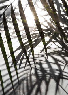 Sunlight Plakat