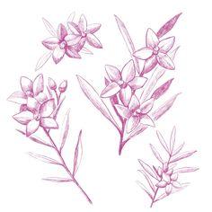 花(サザンクロス)の線画 | 熊本のイラストレーター わたなべみきこ