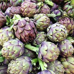 Artichoke. Purple and green color.