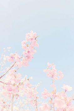 Lock screen wallpaper, screen wallpaper и pastel wallpaper. Cute Iphone 6 Wallpaper, Kawaii Wallpaper, Pink Wallpaper, Screen Wallpaper, Flower Wallpaper, Cute Wallpapers, Wallpaper Backgrounds, Floral Wallpapers, Nature Wallpaper