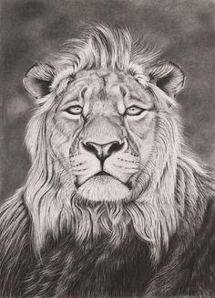 Artist: Ashleigh Dix; Charcoal, Drawing Lion #Art #AnimalArt #Lion #Lions #Cats, Lion