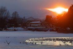 みちのく白鳥のオアシス : みちのくの大自然 Iwate Japan