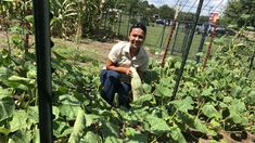 Seed Bank Helps Preserve Cherokee Culture Through Traditional Foods : The Salt : NPR