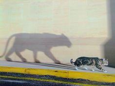 Picture of day nbsp Cat Shadow Geometric Tiger, Sufjan Stevens, Love Your Neighbour, Cat Life, Big Cats, Pet Birds, Kitty, Animals, Lighter