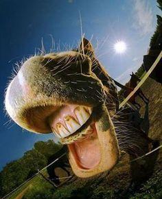 animal smile - Recherche Google